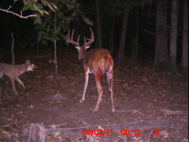kill buck Scratching your head this deer season brad fitzpatrick tells you where to kill a big buck in the rut this year.