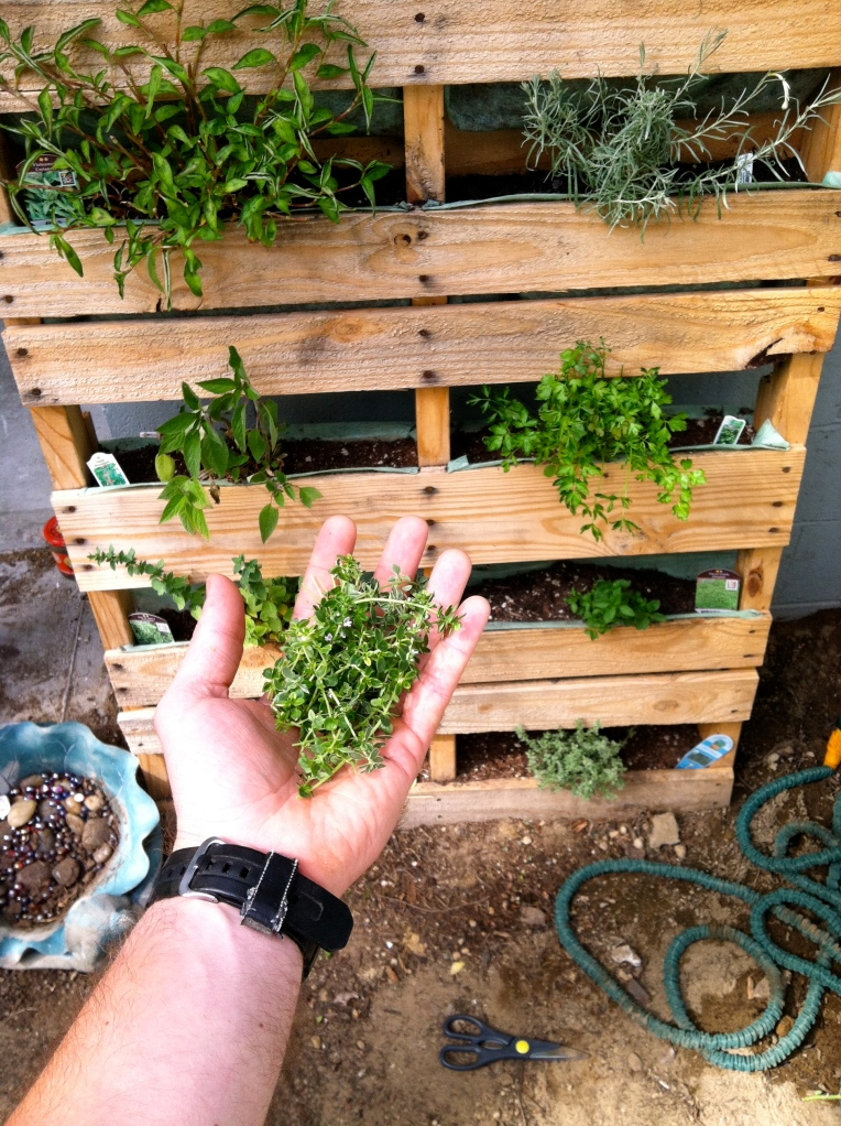 Fresh Herbs From The Garden